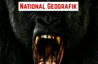 O The Great & Eloh Kush - National Geografik